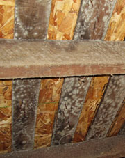 Wood Sub Floor in East Liverpool with Mold