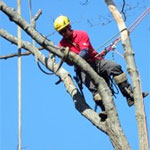 Tree & Shrub Removal image