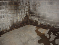 Damp And Leaking Basement Walls