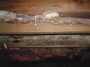 Mold in Parkville crawl space