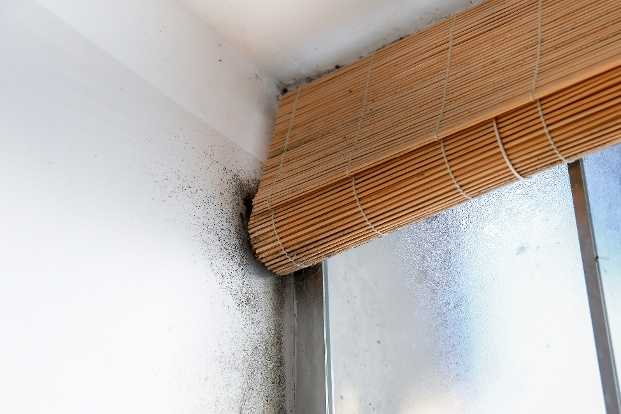Mold is a sign that your home may have more water damage than you thought. Mold thrives in moisture filled...