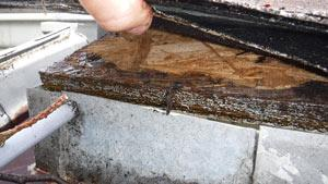 Rotting fascia board caused by clogged gutter.