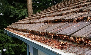 Debris collected on top of gutter cover