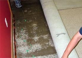 Does Your Basement Carpet Look Like This?