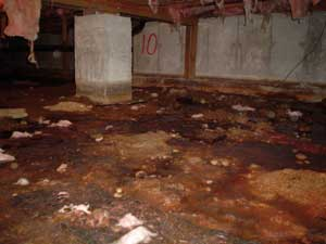 Problems in your crawl space can be affecting your health without you knowing. Learn how the crawl space affects your...