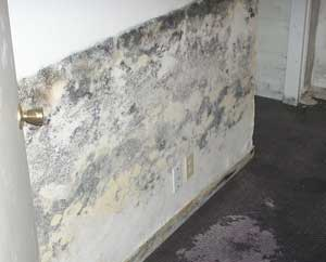 Mold Will Grow Anywhere Where It Can Find Moisture Warmth And Food On Anything Organic In The Bat