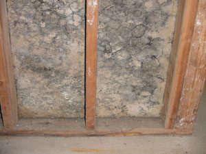 Mold remediation services available in Central Maine