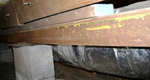 Crawl space support beams with wood rot damage in Sterling Heights, MI