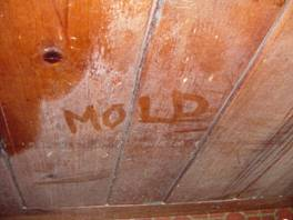 Mold spores can easily grow in a basement- the Journal of Property Management has reported 1 to 10 million spores found on just one square inch of drywall! & Basement Air Quality