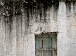 Water damage that is not addressed immediately can result in significant mold growth