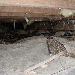 A nasty crawl space with rot, mold, and serious moisture problems