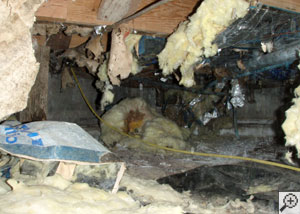 A crawl space filled with moldy debris, failed fiberglass insulation, and construction waste