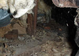 a view of a rat-infested, damp crawl space with rotting fiberglass insulation