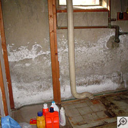 white powder known as efflorescence on basement walls.