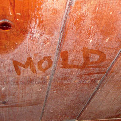 The word 'mold' written with a finger on a moldy wood surface.