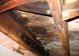 rotting structural wood in a crawl space