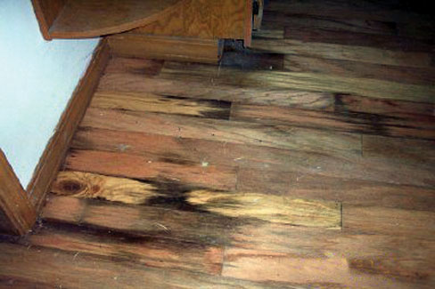 Bat Flooring Damaged By Rot