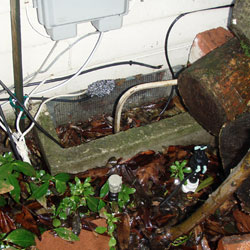 A crawl space vent well filled with leaves and sticks, with water flooding through