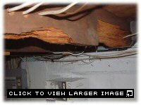 Dry rot in basement or crawl space