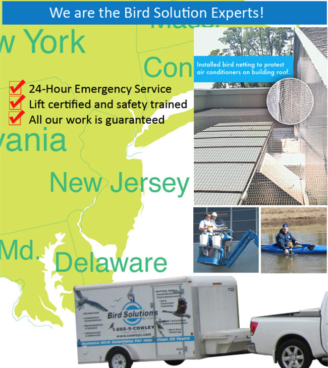 Cowleys Pest Services the bird experts in New Jersey