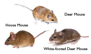mouse-chart