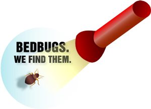 Learn how to avoid bed bugs while traveling this summer....
