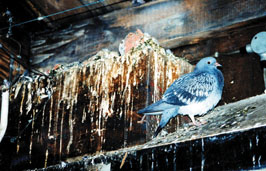 Bird damage prevention in Edison & nearby