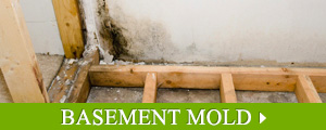 Basement Mold Removal in Greater New England