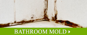 Bathroom Mold Removal in Greater New England