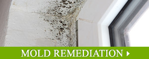 Mold Remediation Contractor in Greater New England